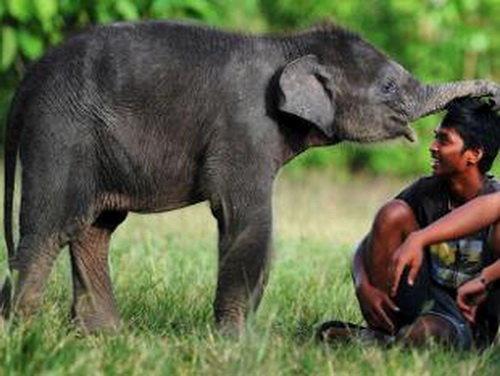 وجود 70 درصد گونه های دنیا در 12 کشور