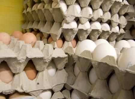 چرا بازهم تخم مرغ گران شد؟