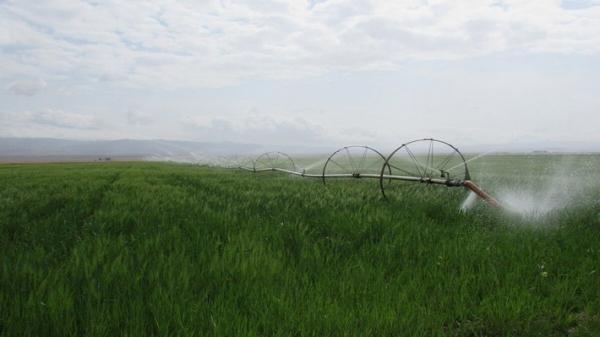 پنج هزار هکتار از اراضی کشاورزی قزوین به آبیاری نوین مجهز می شوند