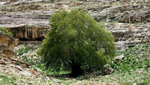ثبت درختان، حفاظت از بازمانده های سبز تاریخ